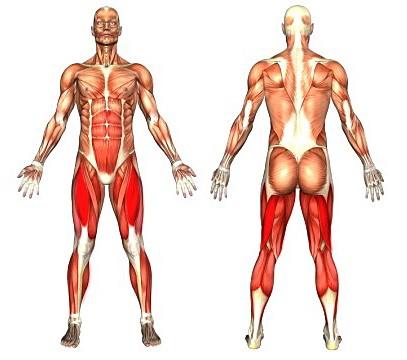 masę mięśniową